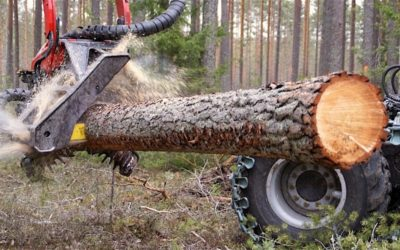 Dřevo jako interiérový a konstrukční prvek